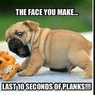 CUTENESS but seriously... The time spent holding a plank is the longest EVER ❌⏰ X-Coach Liss  #vfxbody #plank #gymhumor #fitness #fitfam #gym #gymlife #bodybuilding #gymrat #funny #gymmemes #workout #lol #gains #fitspo #legday #fitnesshumor #gymmeme #fitlife #beastmode #gymflow #lift #fit #motivation #humor #instafit #gymtime #exercise #girlswholift #fitchick