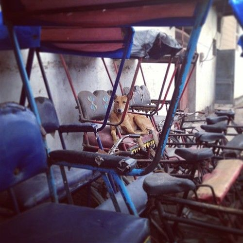 Loi Bazar, Vrindavan, India.  Dog taking a rest in bicycle rickshaw