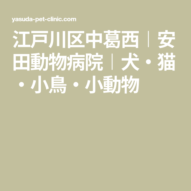 江戸川区中葛西 安田動物病院 犬 猫 小鳥 小動物 犬 動物 病院