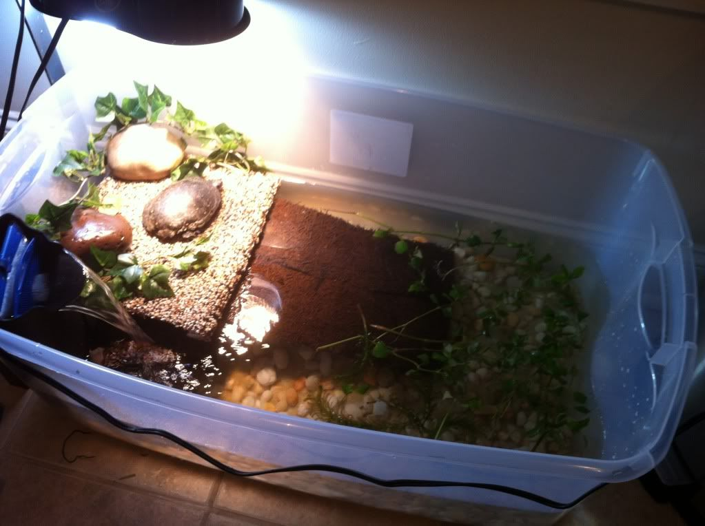 Best red eared turtle tank google search pet turtle for Habitat container