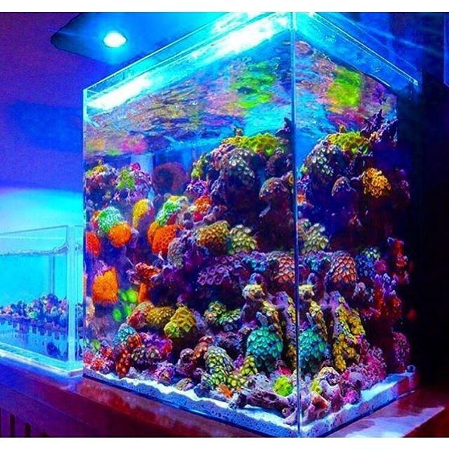 Amazing Softie Dominated Reef Tank, Owner Unknown #instareef #reefpack #reeftank…