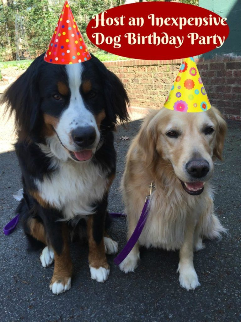 How To Host An Inexpensive Dog Birthday Party Cake Recipes Too