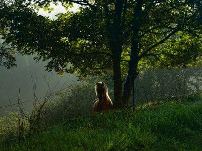 Heinrich Wilhelm: Ein Pferd auf der morgendlichen Weide - Leinwandbild auf Keilrahmen