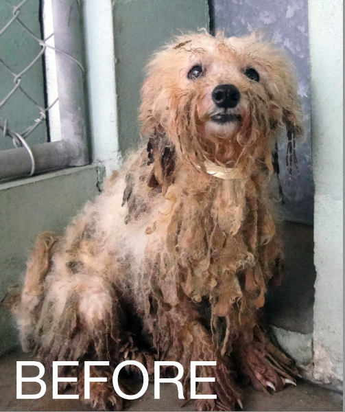 Puppy Mill Dogs Before And After Photos Puppy Mills Sick Dog Puppy Mill Rescue