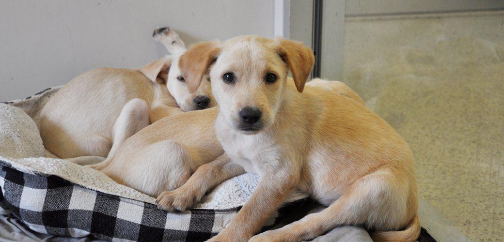 ASPCA on Aspca, Pets, Animal protection