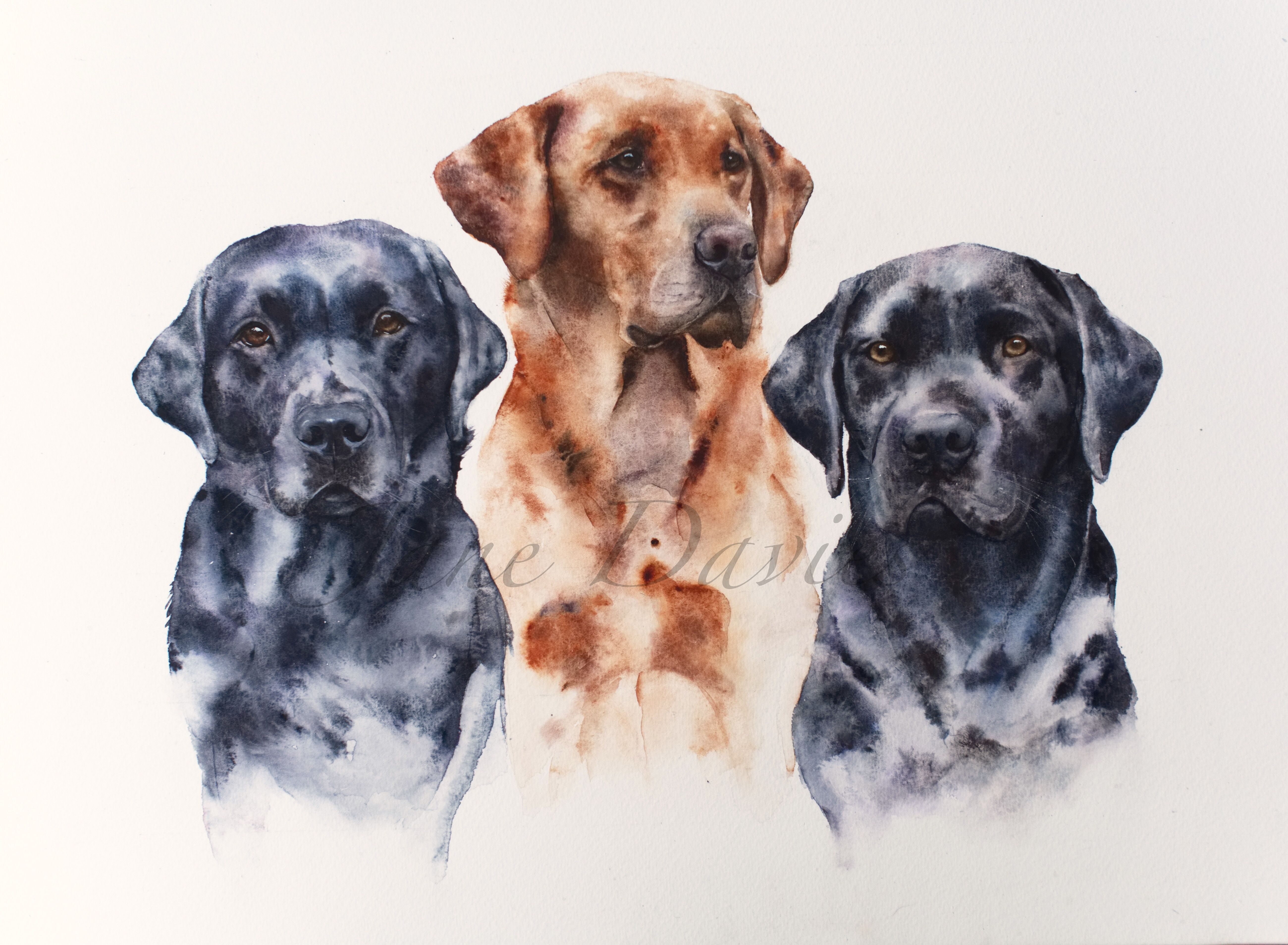 Pet Portrait Of Three Labradors Painted By Watercolour Artist Jane
