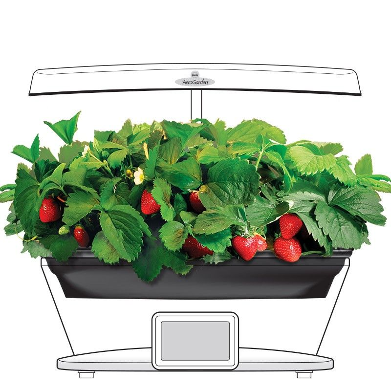 Aerogarden Grow Bowl And Strawberry Kit For All Ultra And 640 x 480