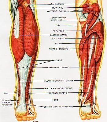 Shin Splints and Shin Splints Treatment | How to Get Rid of Shin ...