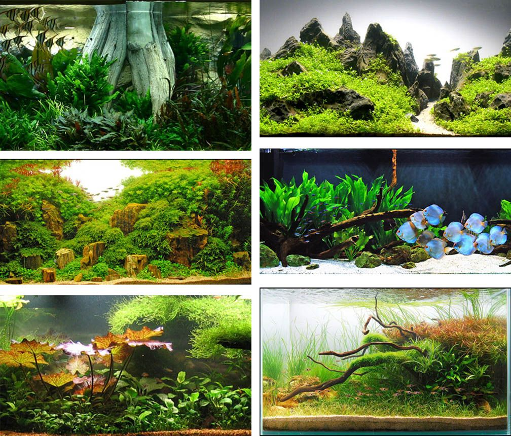 Aquascape Style: Various Styles Of Aquascapes
