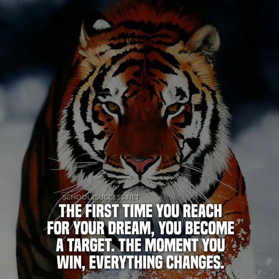 Snapchat Anabolictrader On Instagram You Will Succeed Not Immediately But Absolutely And Definitely Tiger Tigerseye Animal Motivationalquote Success
