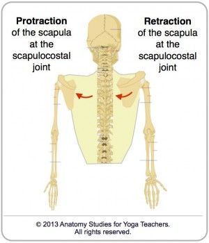 """Image result for scapula protraction"""""""
