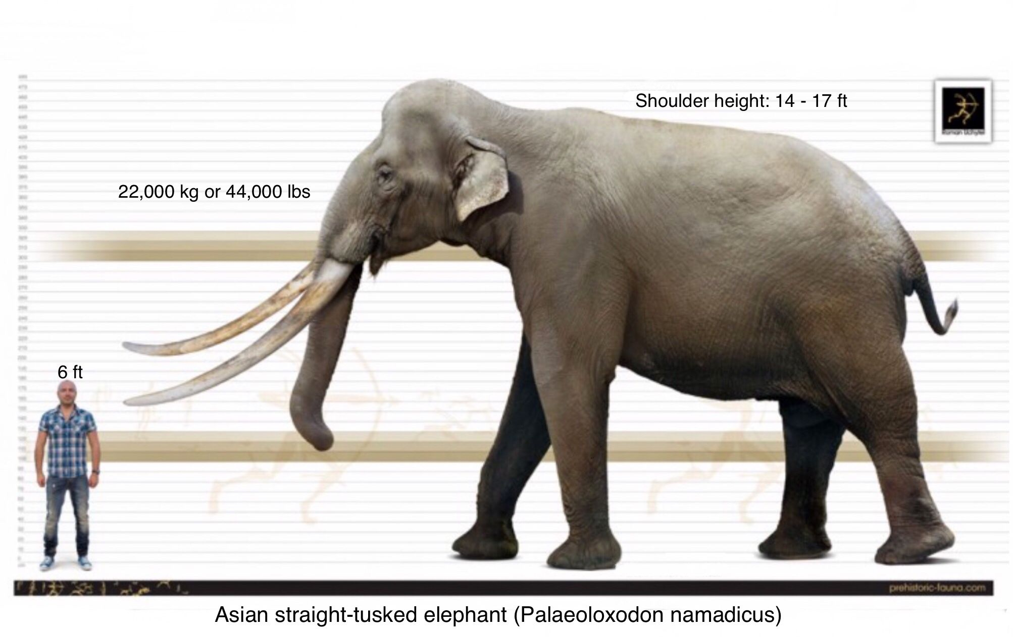 Palaeoloxodon namadicus is a prehistoric straight-tusked elephant that ranged through Pleistocene Asia, fro… | Prehistoric animals, Extinct animals, Ancient animals