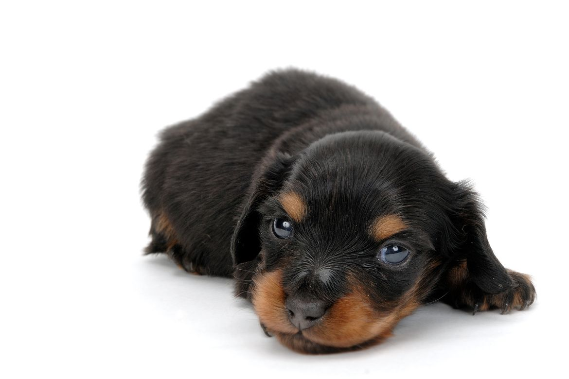Pin By Mary Hall On Dachshunds Puppies Cute Animals Dachshund Love