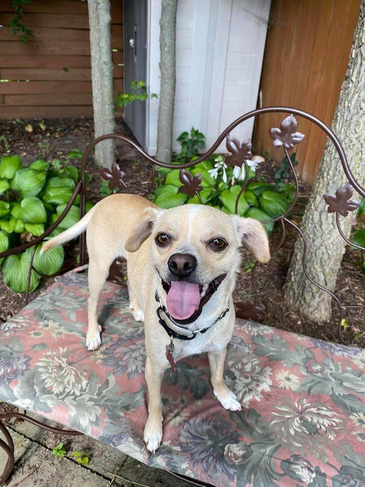 Adopt Milo on Petfinder in 2020 Dog adoption, Help