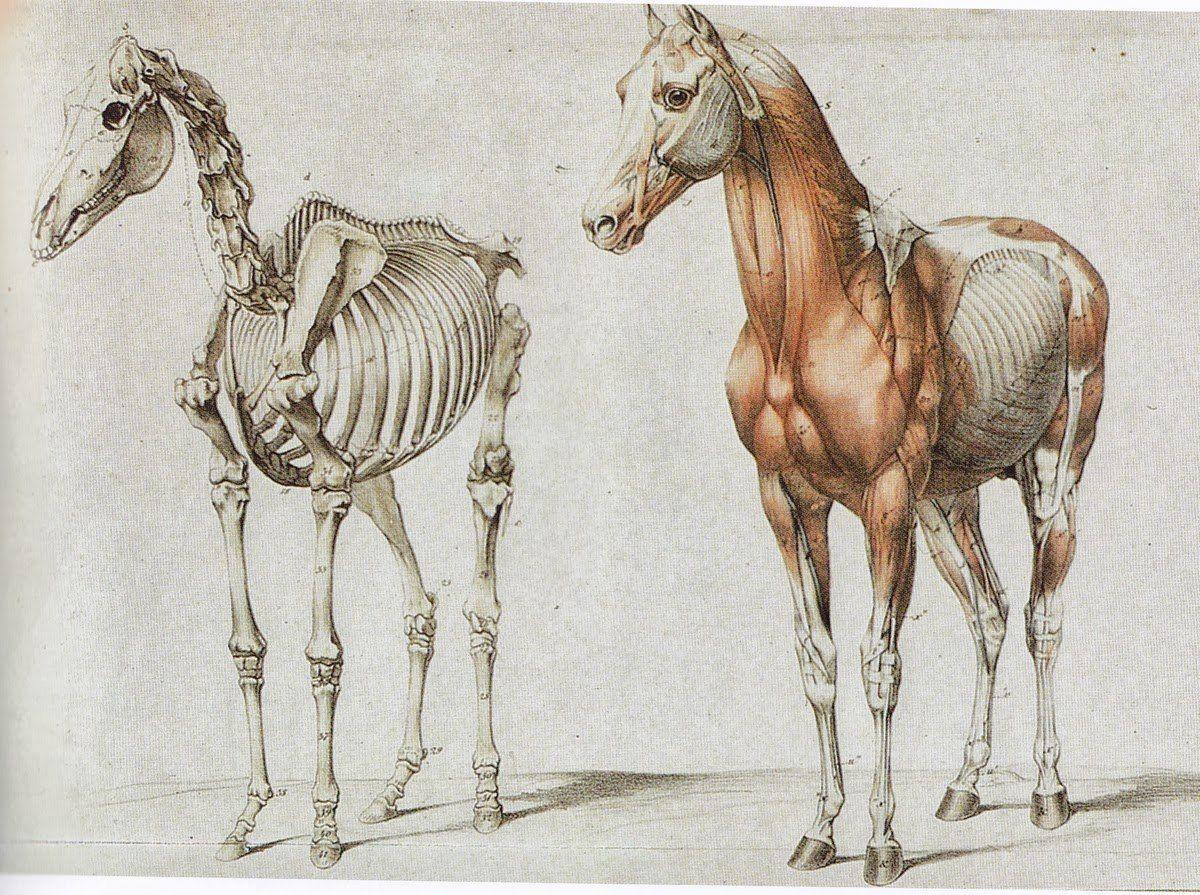 испанский шаг лошади картинки анфас каркасных домах используют