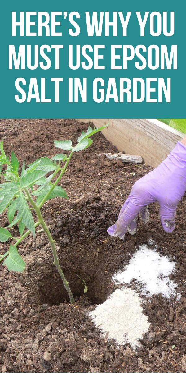Here's Why You Must Use Epsom Salt In Garden - Gar