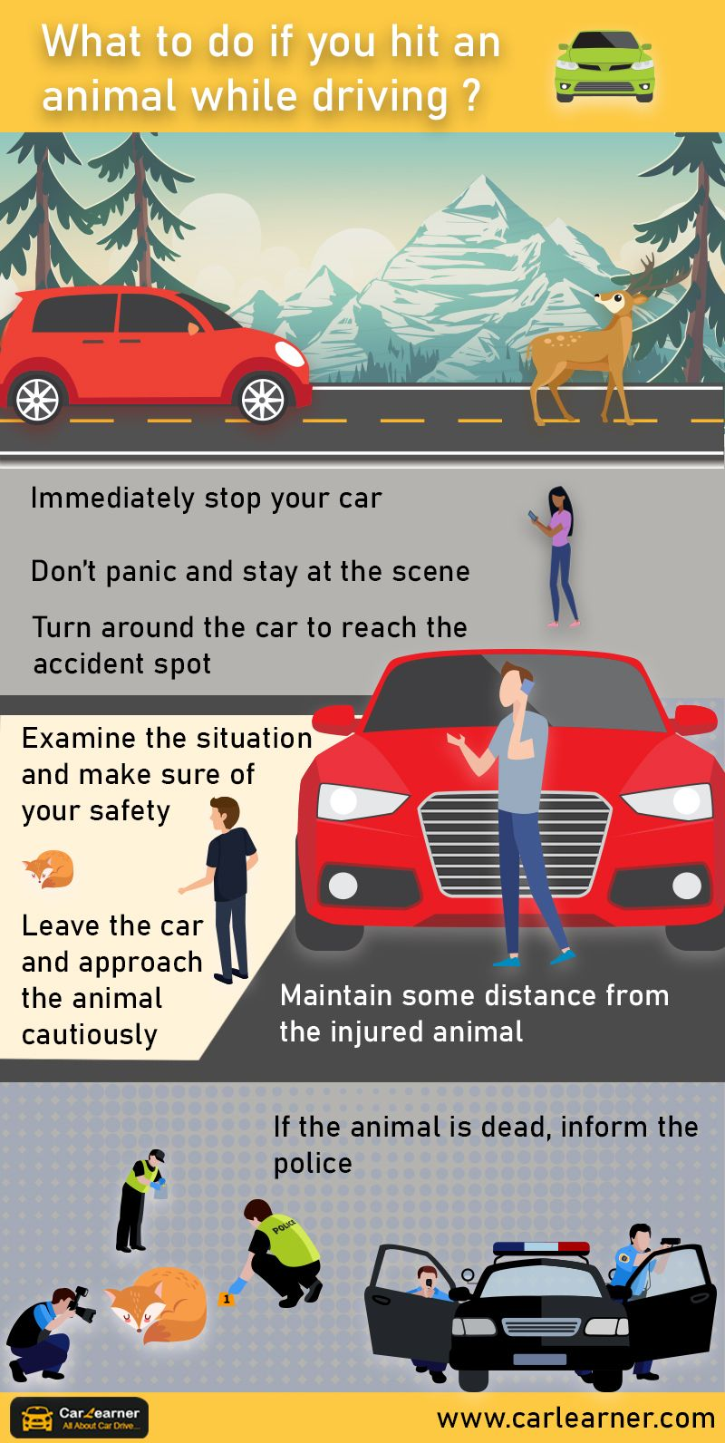 What To Do If You Hit An Animal While Driving