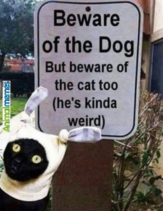 Cat Memes You Have Been Warned Animal Humour Cute Animal Memes Funny Animal Jokes