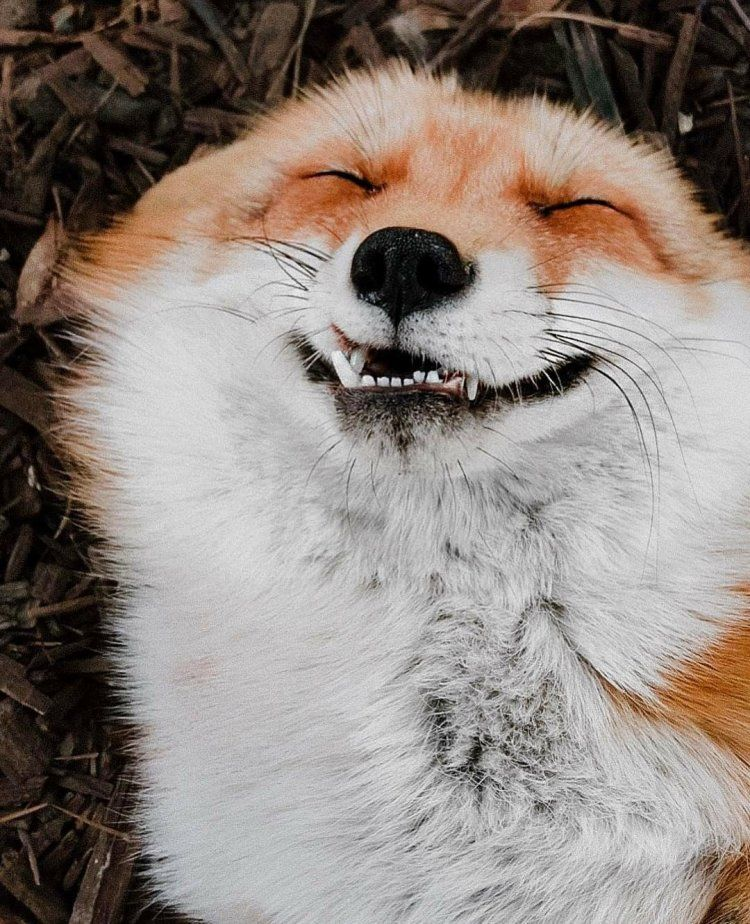 31 Funny Photos Of Some Very Friendly Foxes
