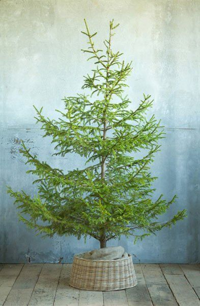 Forgo A Traditional Tree Skirt For A Beautiful Basket Tree skirts