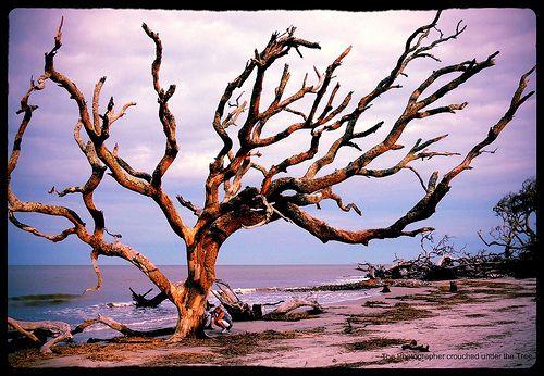 Driftwood Beach, Jekyll Island photo from last week... enhanced via Aviary