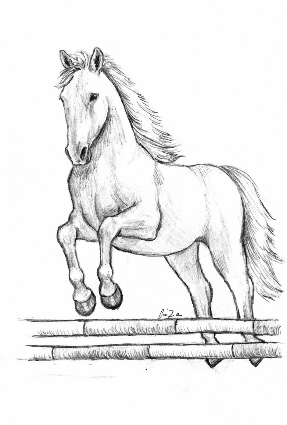 Disegni Da Stampare Cerca Con Google Disegni Di Cavalli