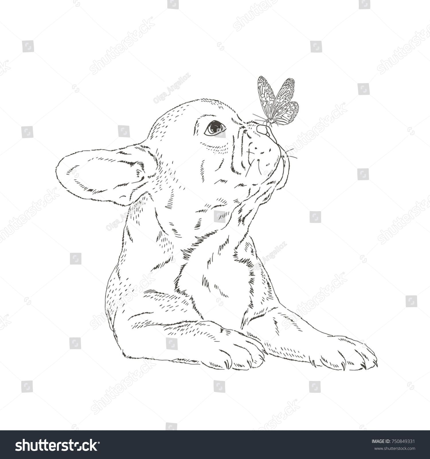 malvorlagen franzosische bulldogge malen