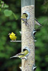 Bird Feeding Tips! Reduce window collisions, keep birds ...