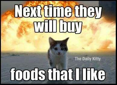 Cats..  Katzen..