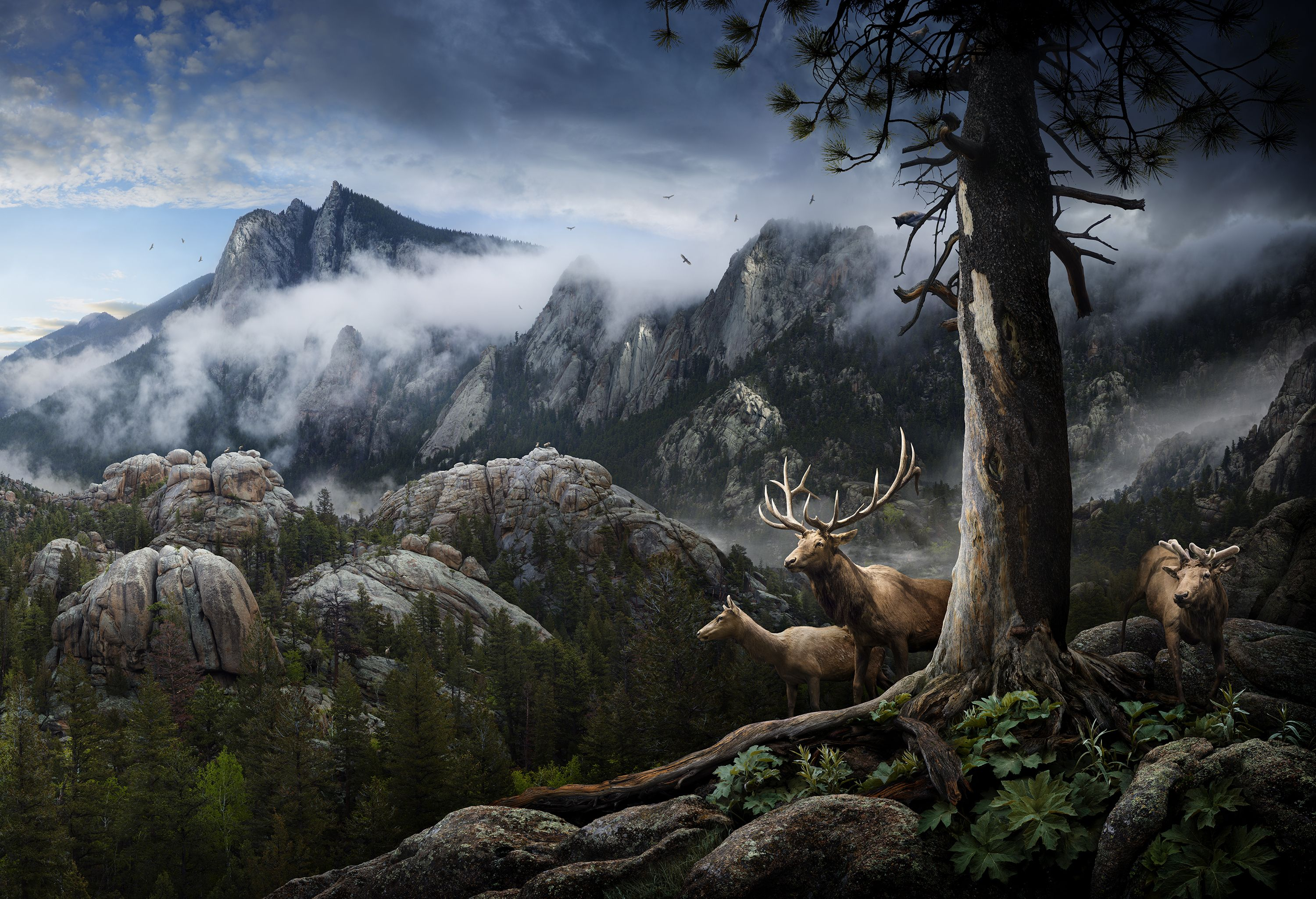 Incredible Photographs Between Idealization And Realism By Nick Pedersen Panoramic Images Scenery Rocky Mountain National Park
