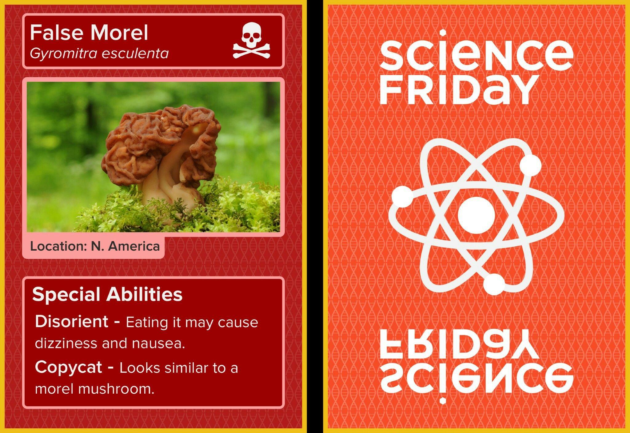 False morel mushroom trading card. Science Friday.