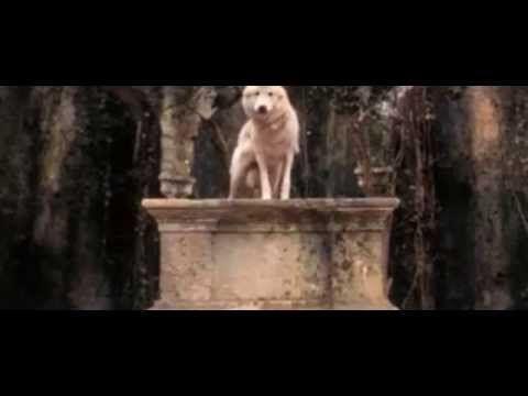 Pakt Der Wölfe Ganzer Film Deutsch
