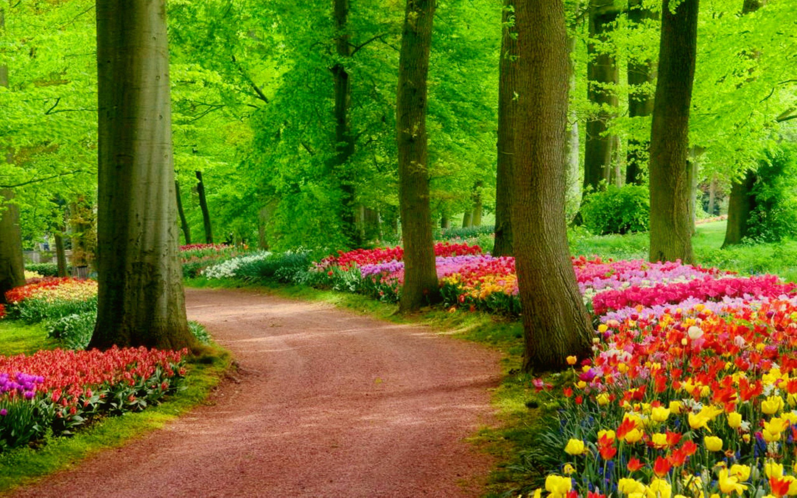 Colorful Spring Park Jpg 2560 1600 Landscape Pictures Nature Desktop Wallpaper Nature Images Hd