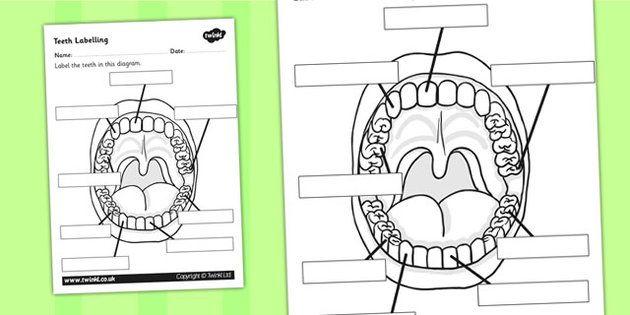 Teeth Labelling Worksheet Teeth Ourselves My Body Labels
