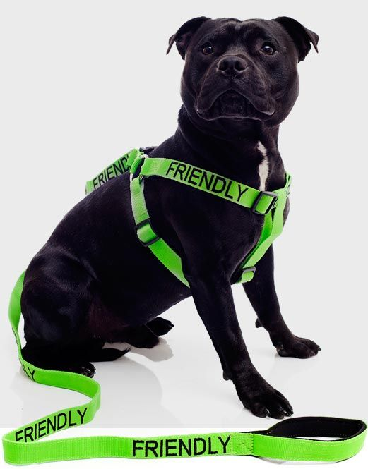 the best selling new dog collars leads harnesses for. Black Bedroom Furniture Sets. Home Design Ideas