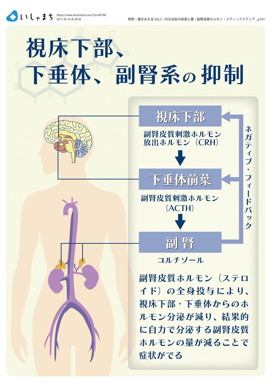 皮質 働き 副腎 ホルモン