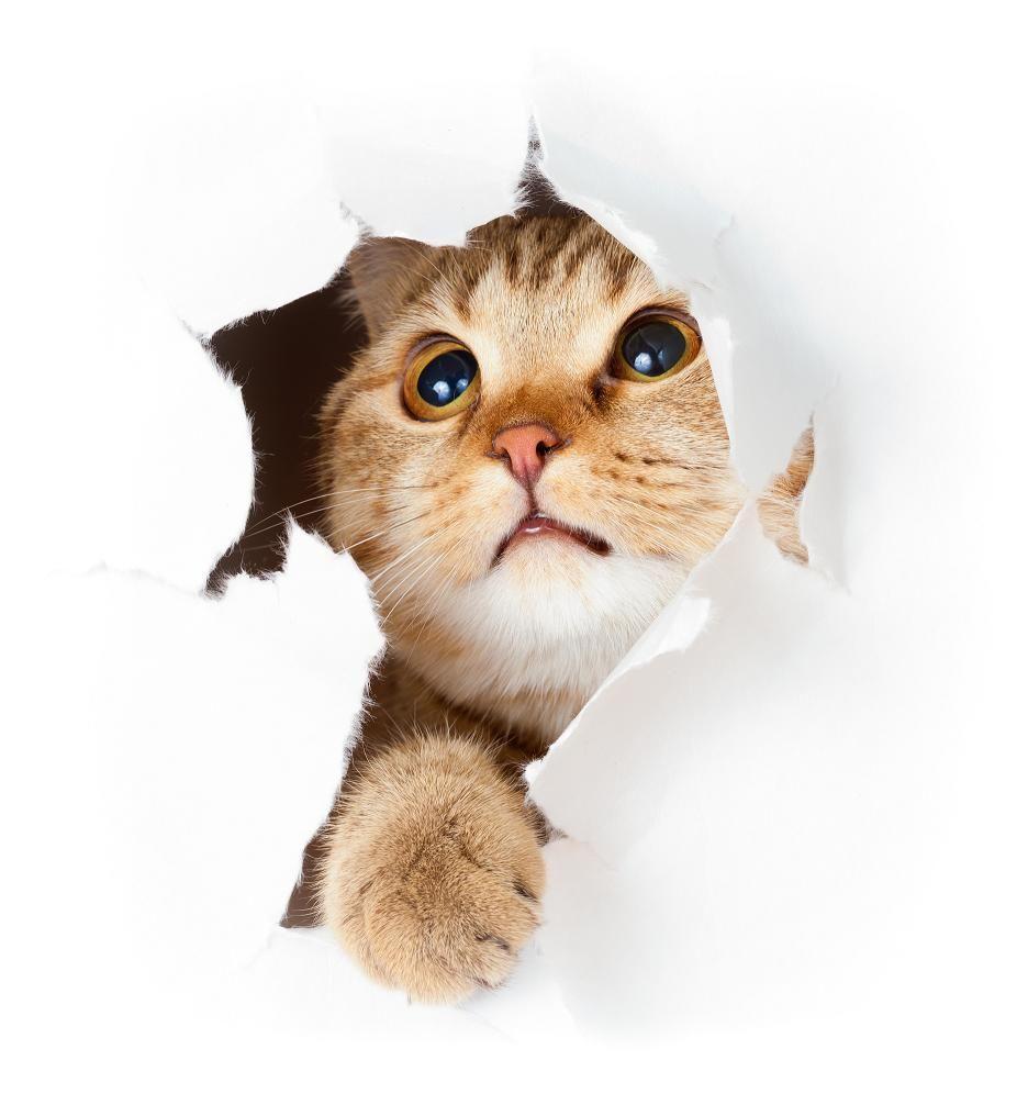 Tendea listasi kissojen hämmentävimmät temput. Tekeekö sinun kissasi näin? #Tendeablog