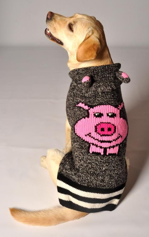 PIGGY - BACK Need this for Indy,lol | Dog sweaters, Chilly ...