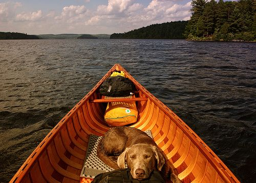 What a life: a canoe, a big lake, and Luca (my future dog, who looks just like this one).