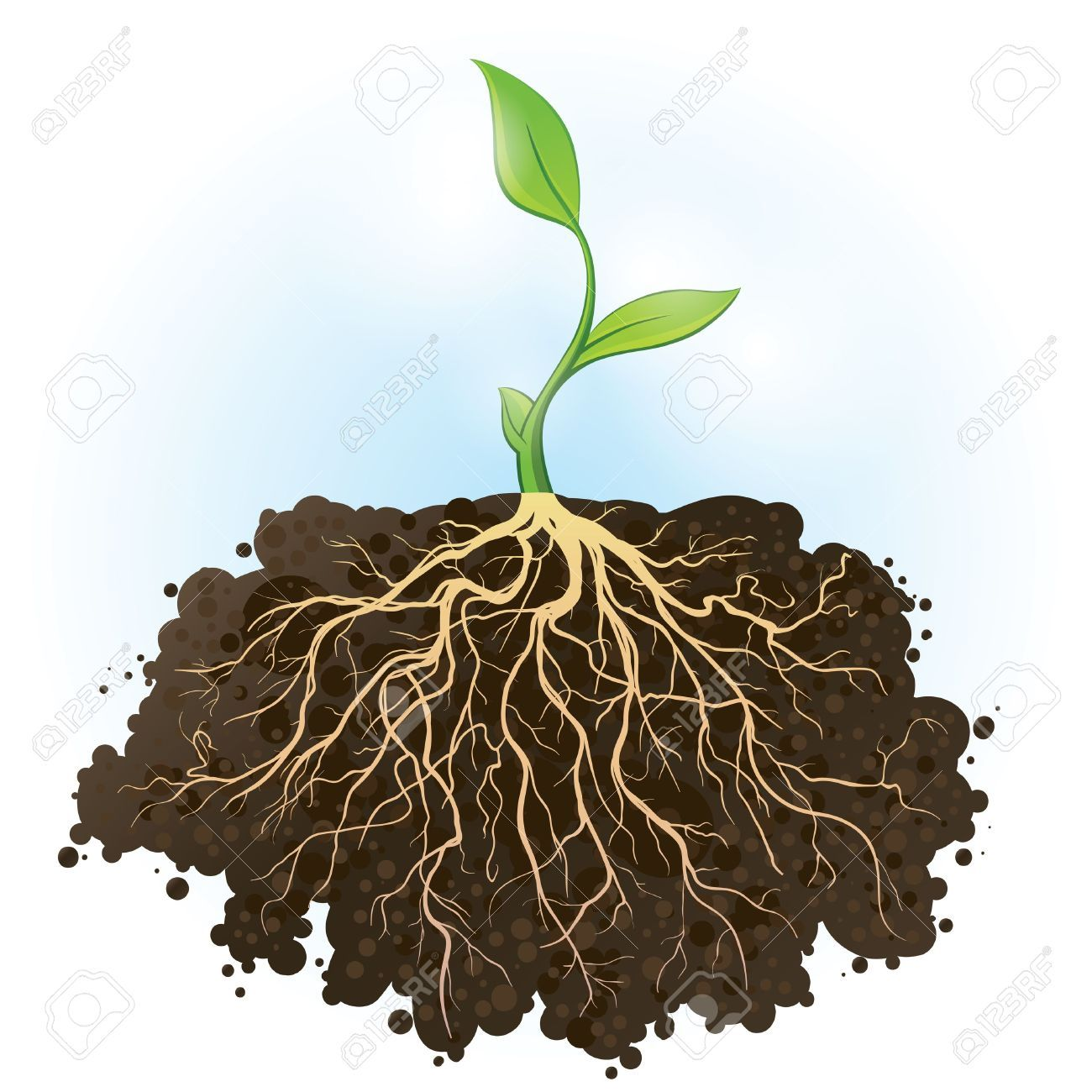 Plant With Roots