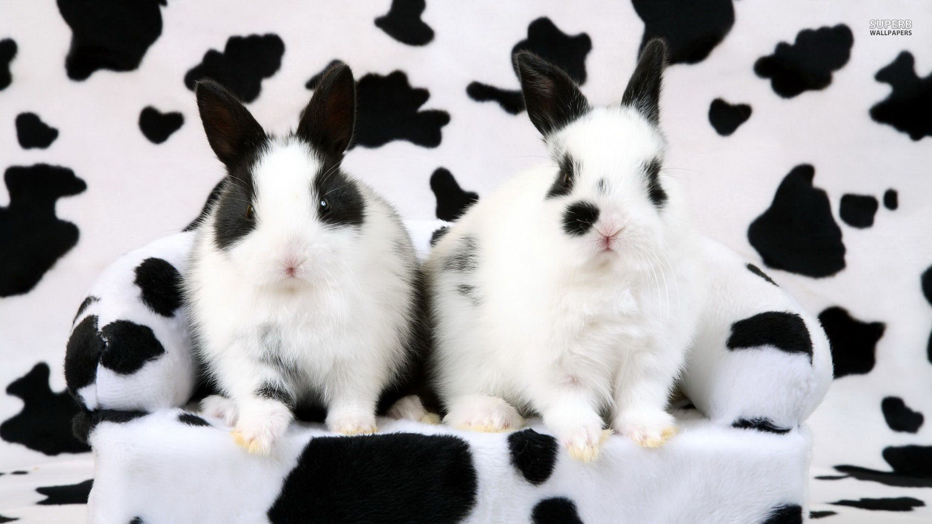 black and white rabbits | Black and white rabbits ...