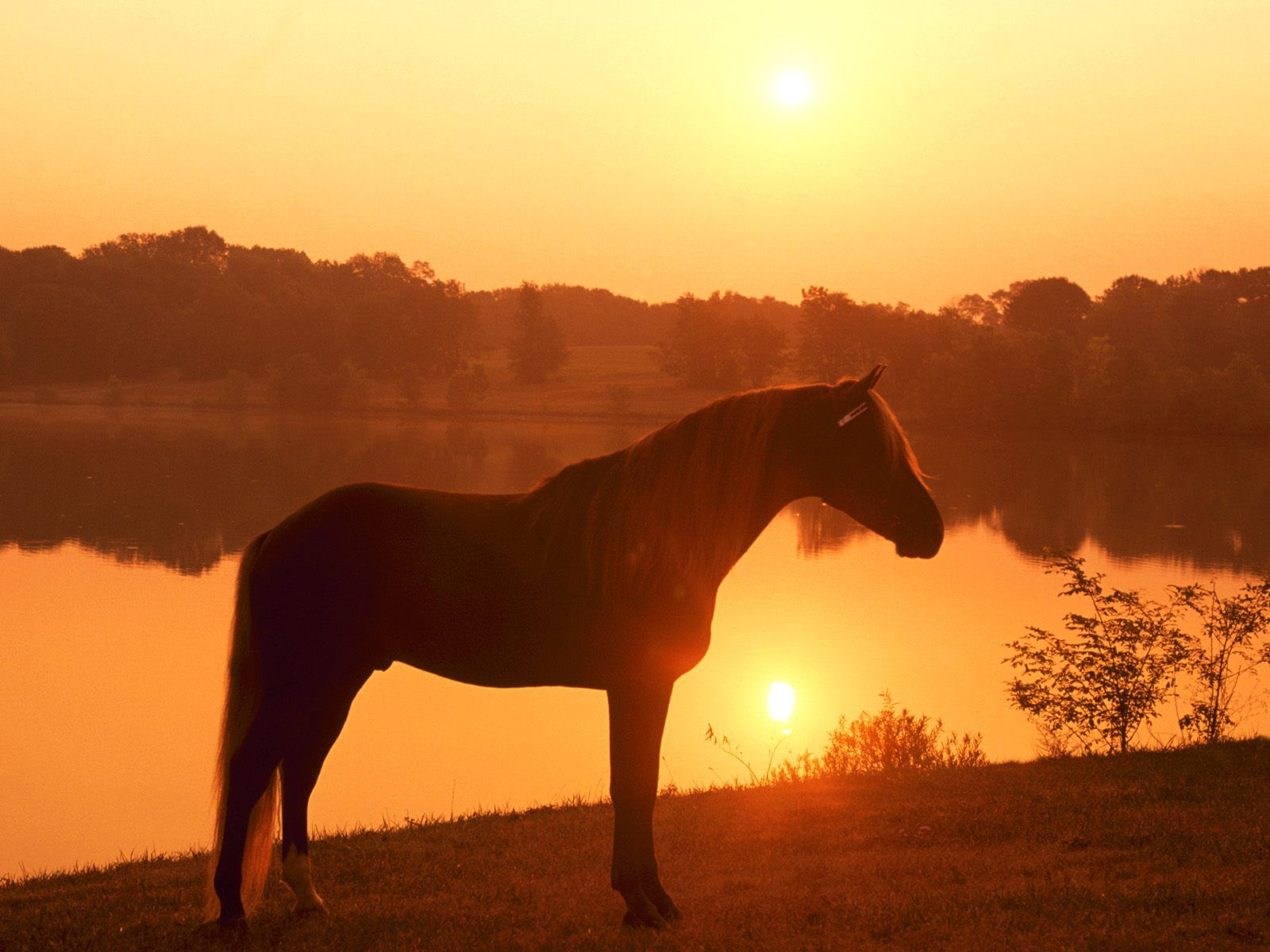 Beautiful Wallpaper Horse Sunrise - 0e46541b02a83e04c4e7f42707599a18  Pic_834065.jpg