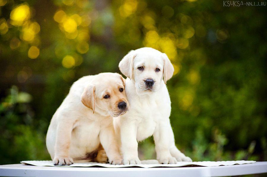 Puppies :)...