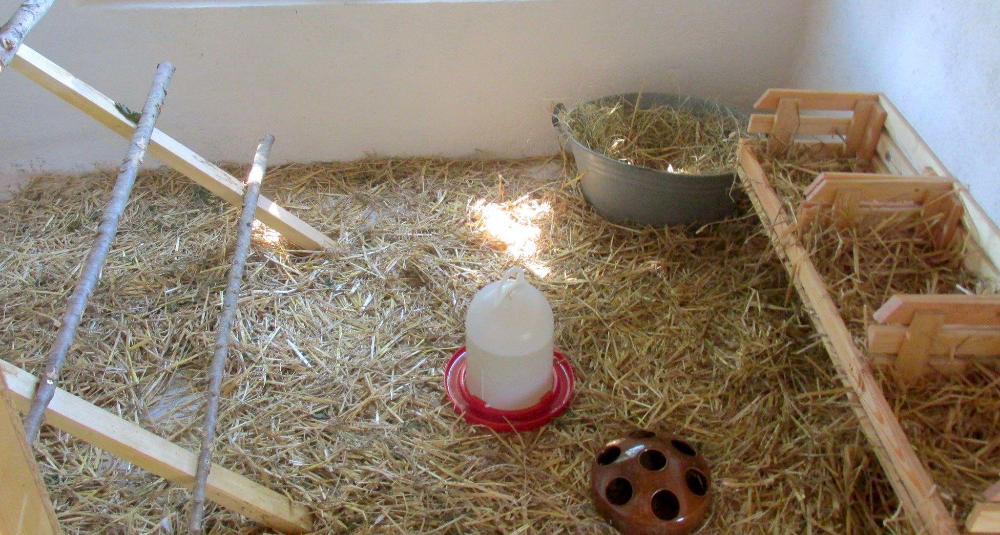 hühnerstall einrichten | unsere hühner | pinterest