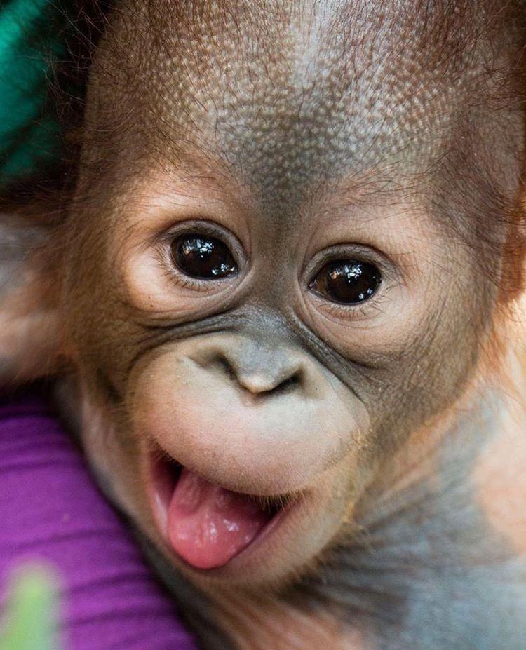 Картинки обезьянка смешные