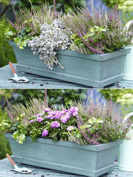 zwei varianten balkonkasten herbstlich bepflanzen kompozycje w donicach pinterest. Black Bedroom Furniture Sets. Home Design Ideas