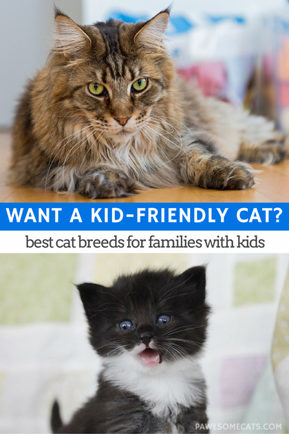Best Cat Breeds For Families With Kids Best Cat Breeds Cat Breeds Cats