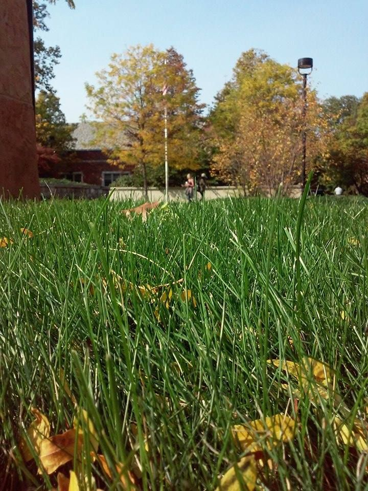 CW Leaves tangled in grass