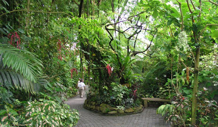 Moody Gardens Rainforest | Moody Gardens features a 10-story ...