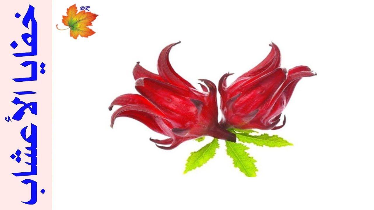 حوار حول زهور الكركديه